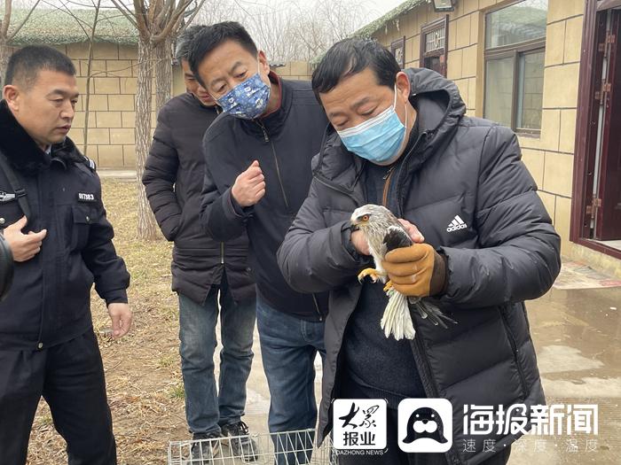 菏泽市民热心救助一只受伤的小鸟 经查竟是国家二级保护动物黑翅鸢