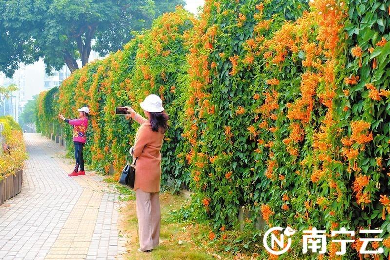 自拍停不下来!人民公园园湖路围墙百余米花带成网红打卡点   记者 宋延康摄