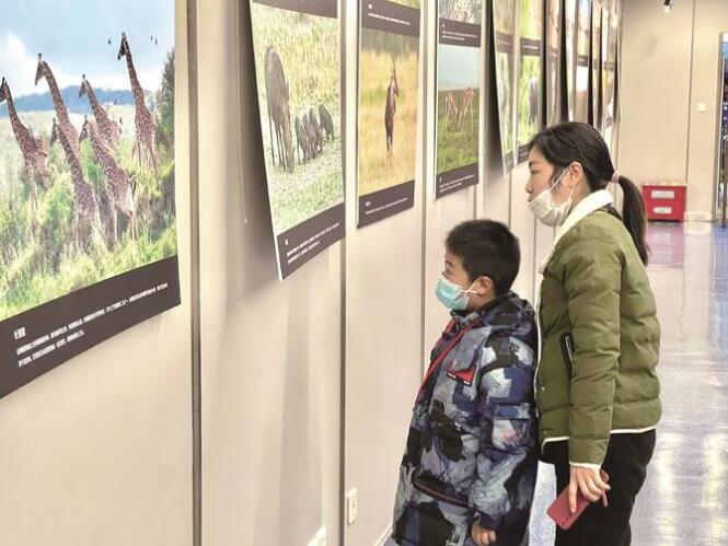 南京市民在金陵图书馆参观《非洲野生动物资源图片展》