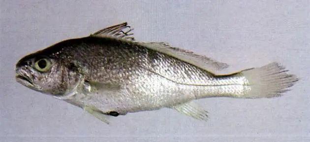 宁波发现一批进口冻鱼包装核酸阳性,未流入市场