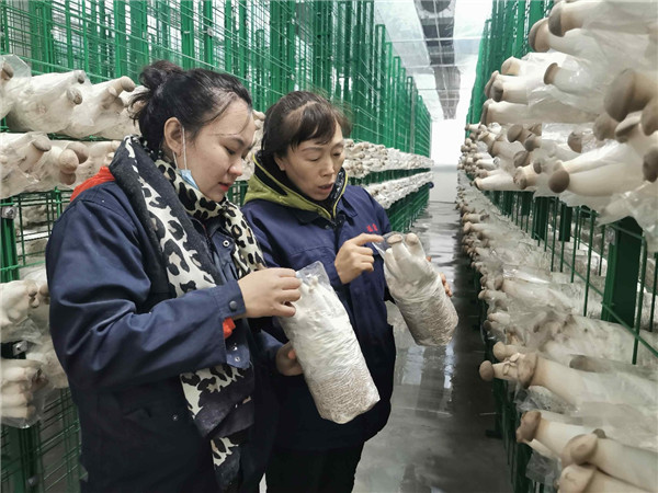 安图县食用菌综合加工示范园竣工投产