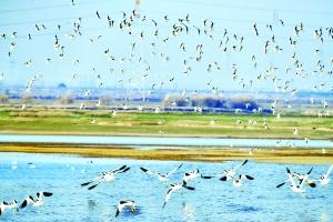 优美的环境 候鸟的天堂