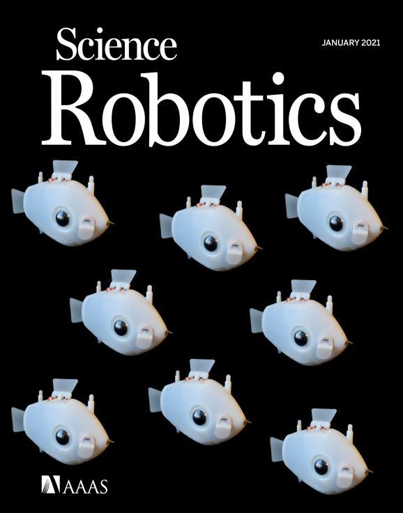 """哈佛的机器鱼学会了智能协作,集体""""游""""上 Science 子刊封面!"""