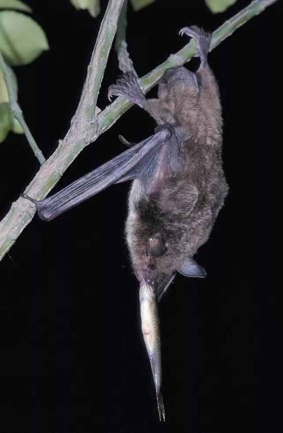 """德清首次发现这种濒危动物 专家:""""说明生态环境不错"""""""