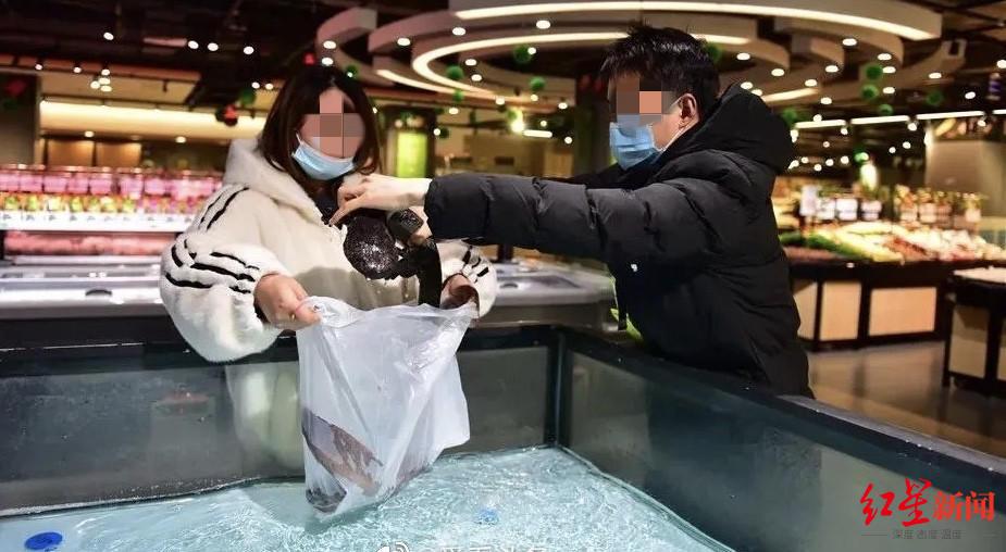 超市售卖人工养殖娃娃鱼被罚 执法部门:无野生动物经营利用许可证