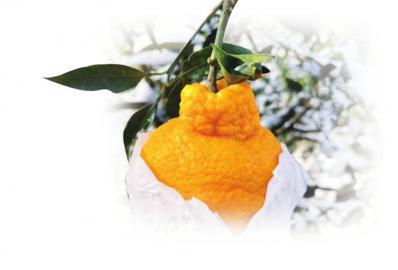 霜冻来了 蔬菜水果提前预防减少损失