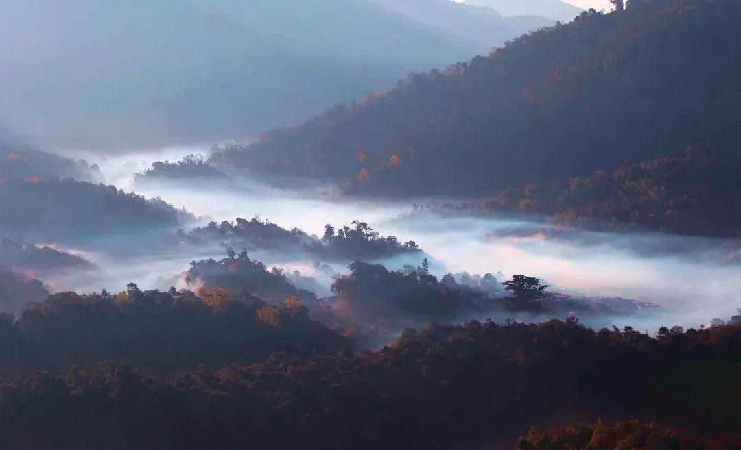 【悦听云南】坐饮香茶爱此山...图片