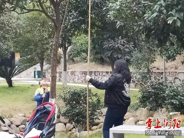 """衡阳一公园内的景观柚""""惨遭毒手"""",断枝残叶落满地"""