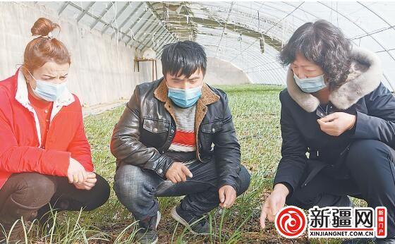 新疆基质栽培在温室中应用效果技术研究取得突破 沙漠温室无土种出环保蔬菜