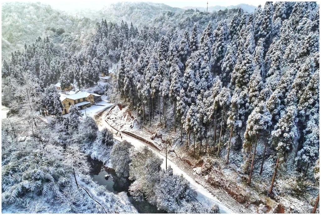 气温骤降,雪花飘落,天台山都被染白了!