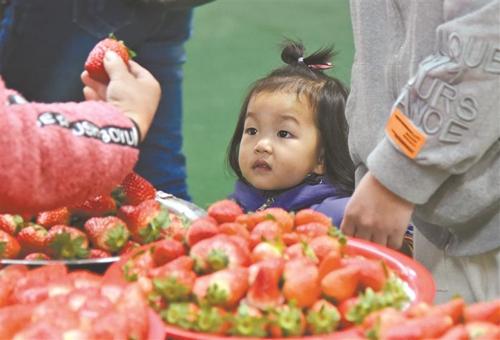 无锡本地草莓大量上市市民购买尝鲜