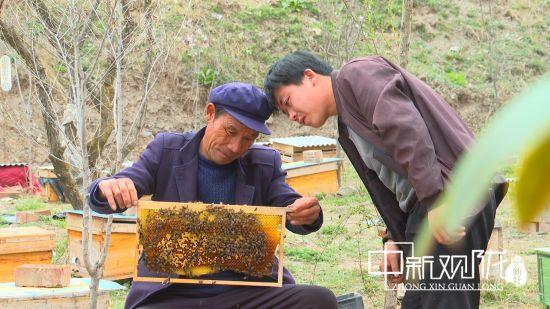 """岷县荣获全国""""蜂业扶贫先进县""""荣誉称号"""