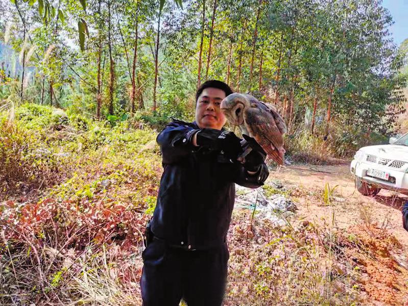 猴面鹰突现博白县某小区 森林派出所民警将鸟儿带回喂养