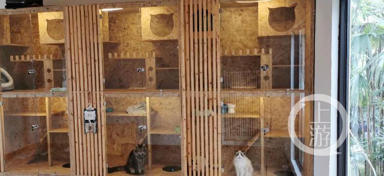 成都春节期间宠物寄养业务遇淡,笼舍有空位价格已下调图3