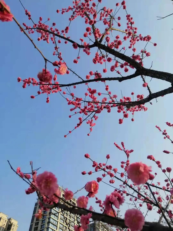 明天晴后天雨,抓紧去享受春光吧~图片