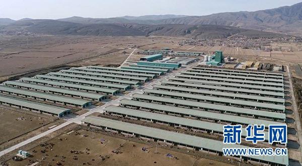 宁夏海原华润农业有限公司肉牛养殖基地(2021年1月7日摄,无人机照片)。新华社记者 王鹏 摄