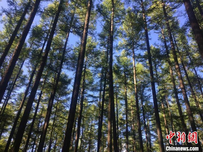 """""""十三五""""期间,山西""""三北""""防护林工程累计下达投资117670万元,安排建设任务314.94万亩。 高瑞峰 摄"""