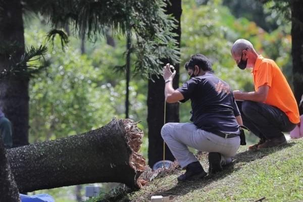 与降噪耳机有关?新加坡一女子晨跑被大树压死