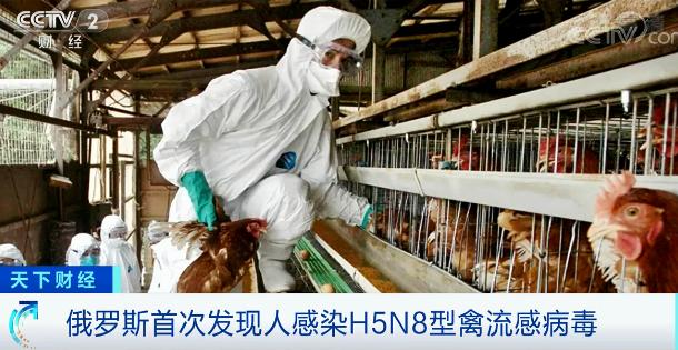 """全球首次发现人感染H5N8型禽流感病毒,不排除变异后""""人传人""""?"""