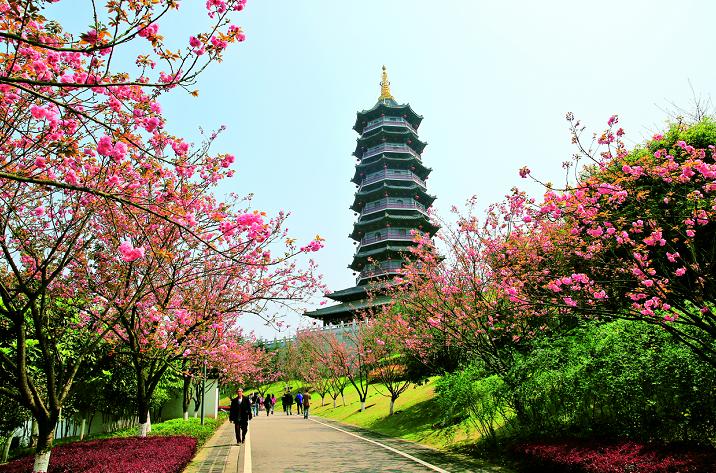 花已开,就等你!送上重庆最全赏花点图片