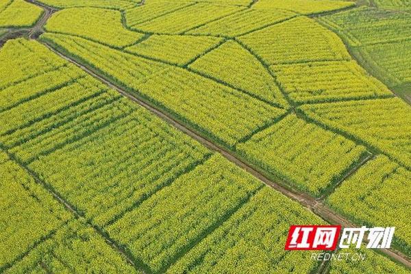江华3万亩高标准农田建设任务基本完成
