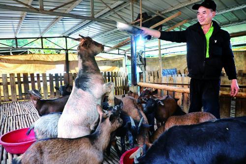 肇庆怀集:扩大工业园 引进绿色养殖 乡村振兴路越走越坚实