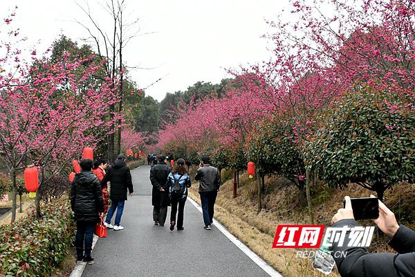 """长沙县第六届红樱文化旅游节开幕 """"入县游""""奖励政策发布"""