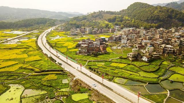 贵州黔西:种植羊肚菌助农增收