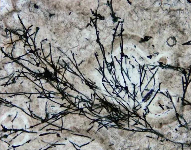 """科学家发现6.3亿年前真菌类生物化石 真菌能去外星环境""""拓荒""""吗?"""