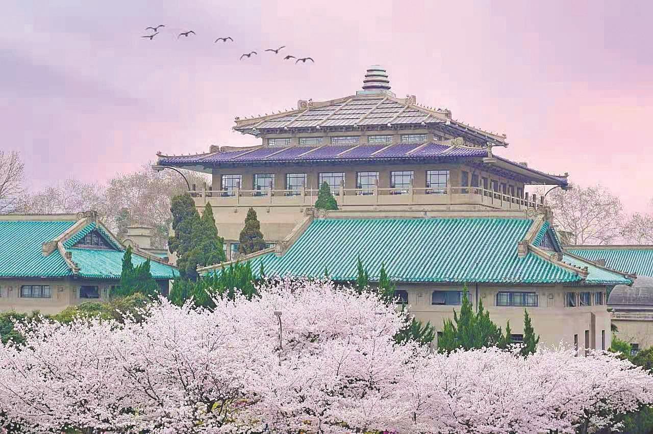 樱花盛开,武汉大学履约 为抗疫医护开放赏樱专场