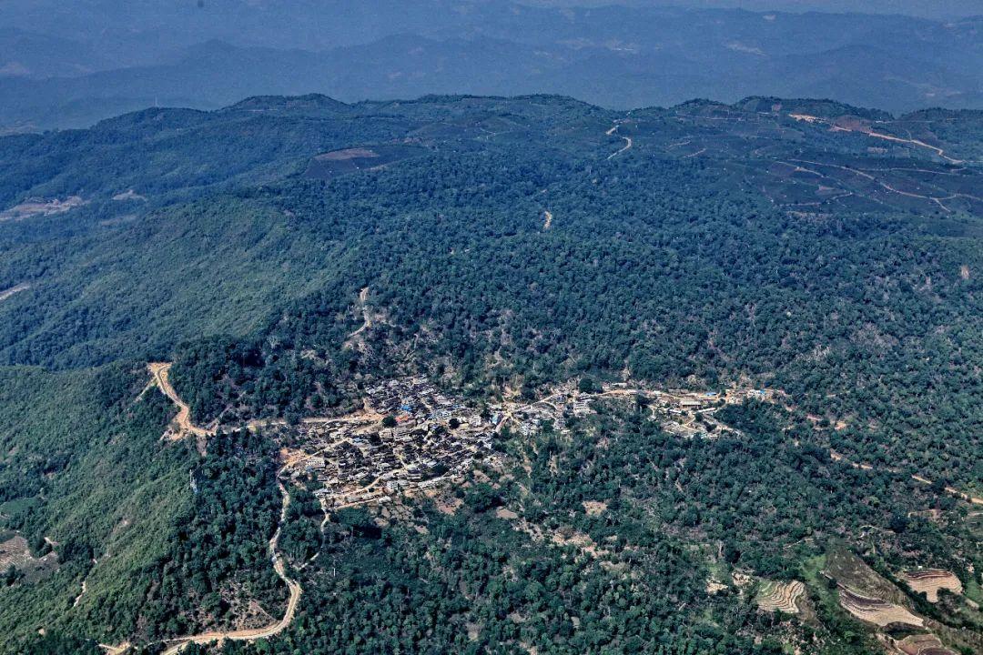 【聚焦】国务院批准景迈山古茶林文化景观2022年申遗图片