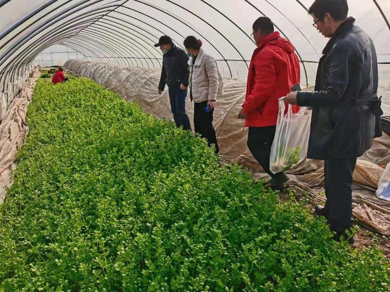 市农业农村局开展春节期间农产品质量安全监督抽检工作