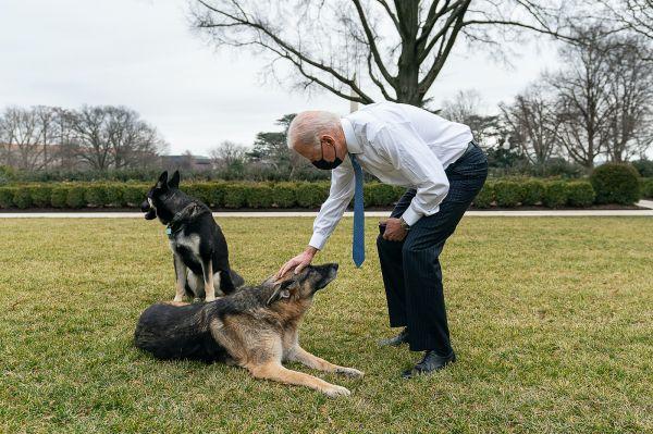 拜登为爱犬在白宫咬人辩护:陌生环境令它焦虑