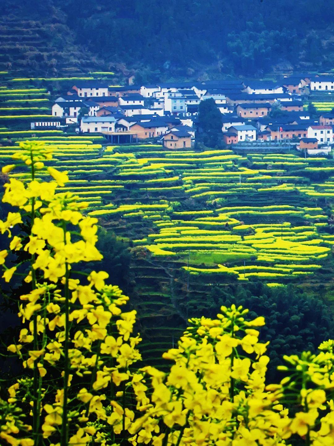 浙江11个隐世古村,一到春天就美成画图片