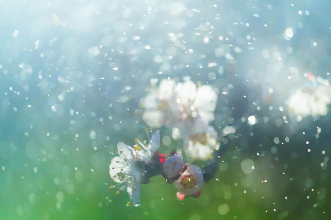 【关注】咳嗽气喘、心力衰竭……花粉过敏非小事!如何预防和治疗?