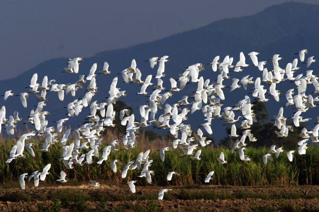 又是一年迁飞季!云南这两地的候鸟登上央视图片
