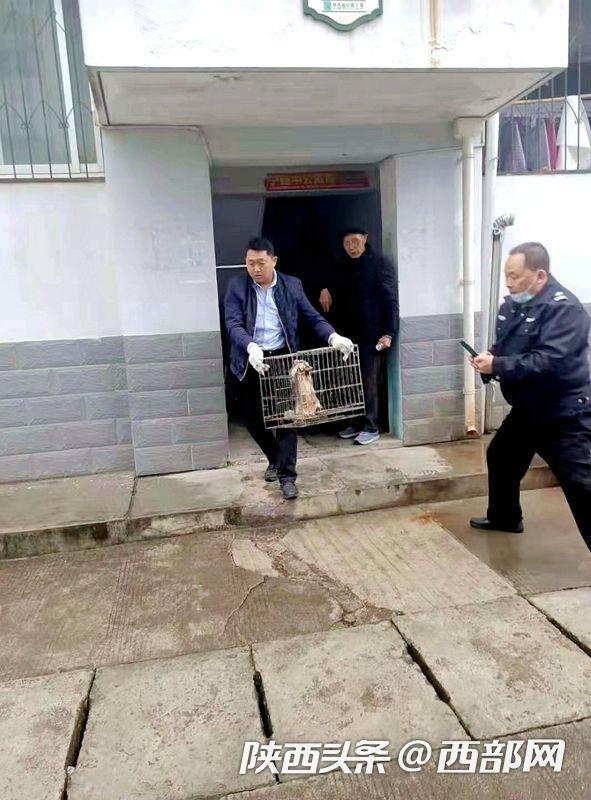 汉中市宁强县秦巴生态保护中心成功救助一只果子狸