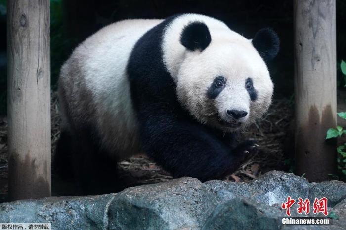 熊猫天龙八部私服网址