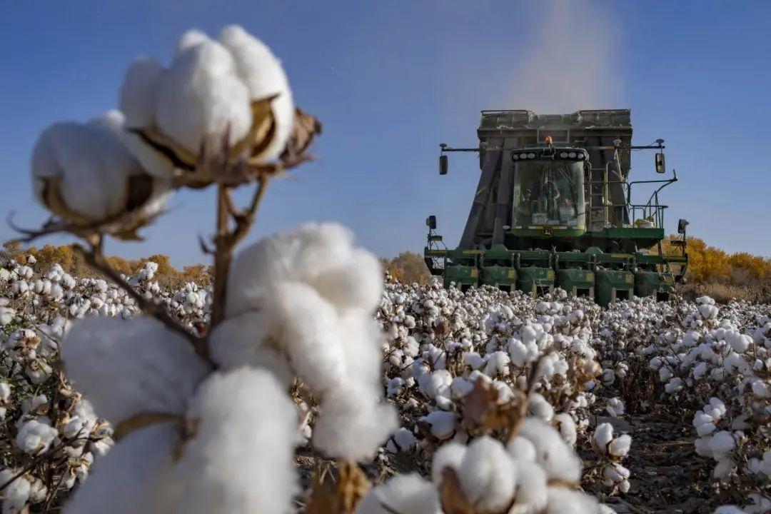 不容抹黑!关于新疆棉花的6个事实图片