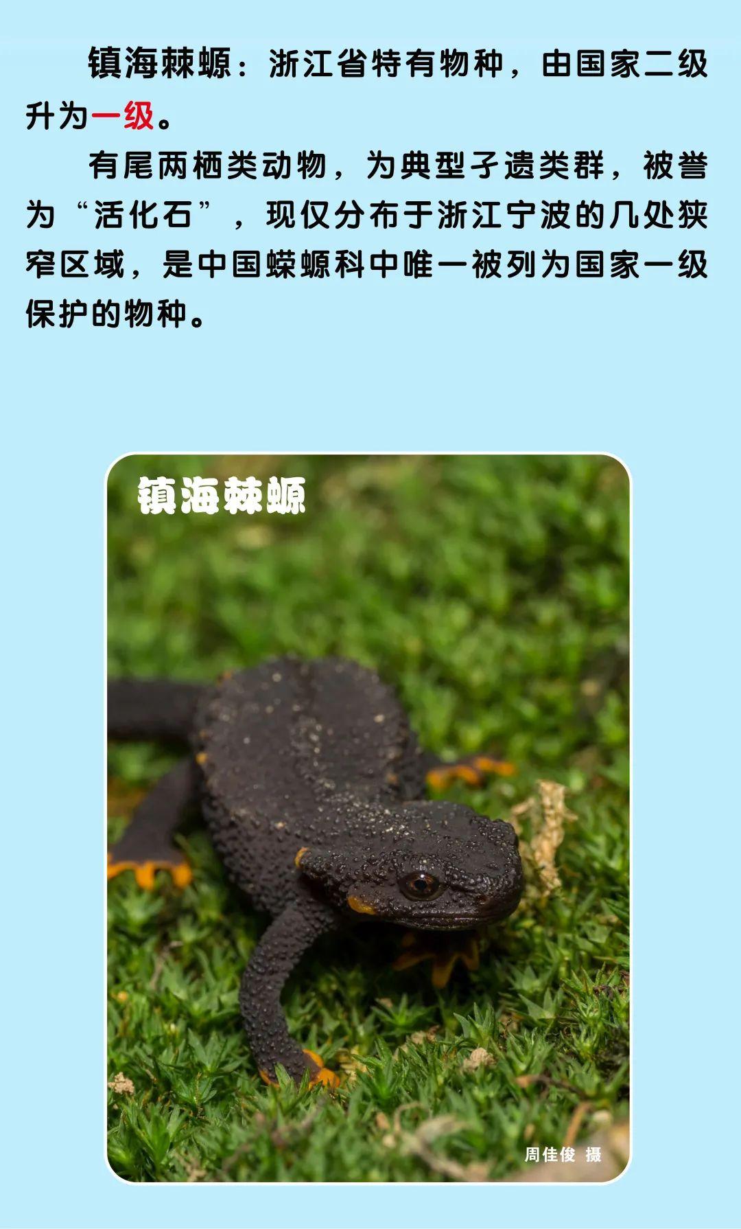 浙江新增一批国家一级二级保护动物,你能叫出它们的名字吗?图片