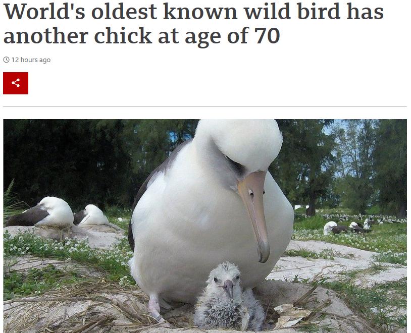 世界最长寿野生鸟再次做母亲 70岁又生下雏鸟
