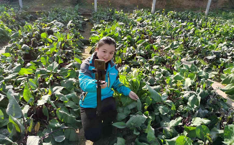 宁乡女海归回乡创业种菜养猪   创办老农快线让农产品直达市民餐桌