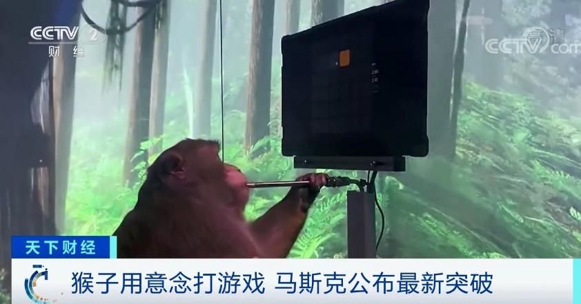 猴子也能打游戏?马斯克公布最新突破!