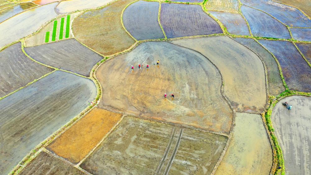 一粒种子扣住粮食安全的关键 农业农村部相关负责人权威解读:我国种业翻身仗怎么打?