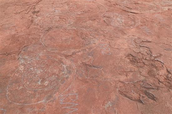 新增发现恐龙足迹化石364枚