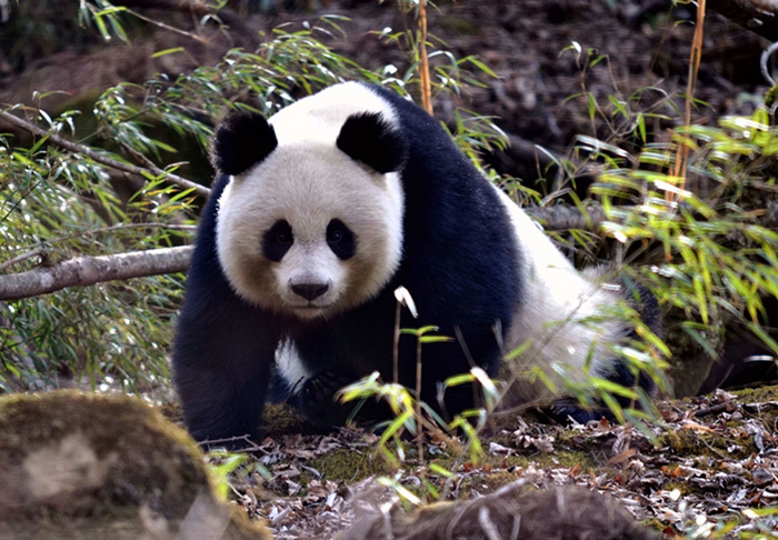 走向万物和谐 生物多样性保护这些年