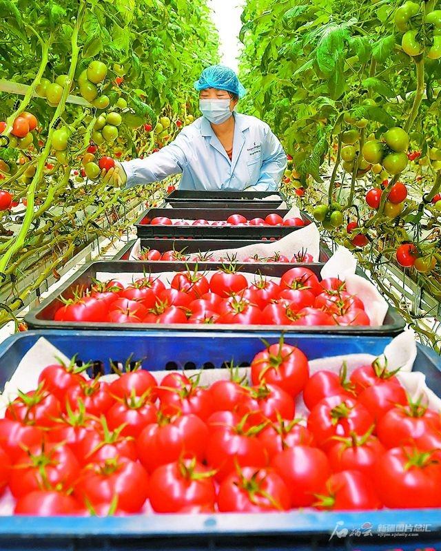 【政策发布】智能化种菜