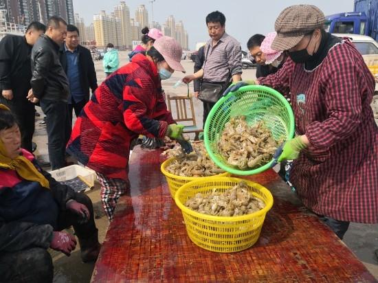 龙口春捕爬虾个大味美 远销烟台青岛,成为市场抢手货
