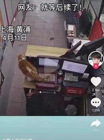 彩票站养的小猫误踩机器打出一张彩票,上万网友围观:就想知道中没中