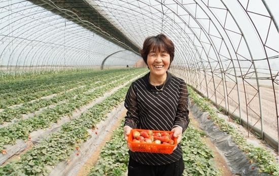 聊城东阿县牛角店镇:草莓产业助力群众脱贫致富